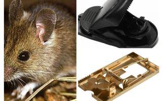 Hoe een muizenval te zetten