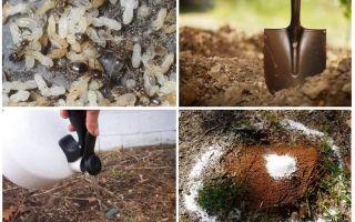 Hoe krijg je mieren uit de tuin folk remedies