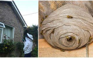 Wegnemen van wespen en wespennesten