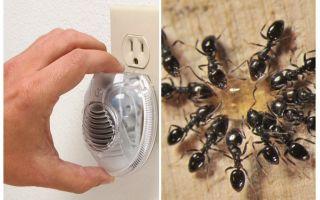 Effectieve ultrasone ant-repeller