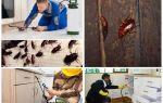 Kakkerlakken bestrijden in een appartement thuis