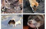 Die muizen eet