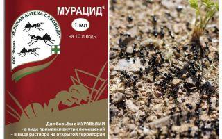 Mieren murmide