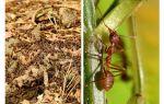 Wat is nuttige mieren