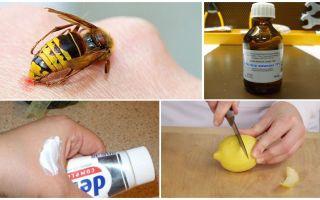 Hoe en hoe de jeuk van een wespensteek thuis te verlichten