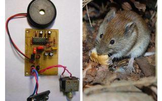Ultrasone repeller ratten en muizen met hun eigen handen
