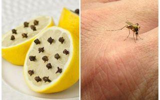 Citroen met muskietenknabbels voor kinderen en volwassenen