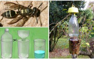 Hoe maak je een val voor wespen uit een plastic fles