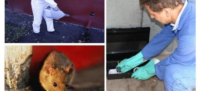Uitroeiing van ratten en muizen door gespecialiseerde diensten