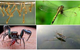 Die muggen eet