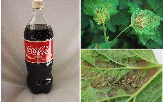 Coca-Cola van bladluis