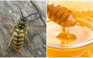 Wespen maken honing of niet