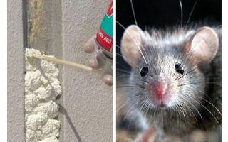 Eten muizen schuim