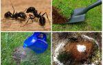 Hoe zich te ontdoen van mieren in de tuin folk remedies