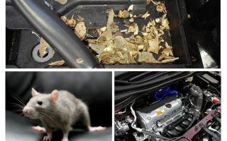 Hoe muizen uit de auto te krijgen
