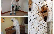 Uitroeiing van kakkerlakken in het appartement