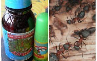 Betekent de zomerbewoner van mieren