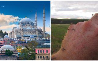 Zijn er muggen in Turkije