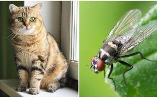 Wat te doen als een kat of kat een vlieg at