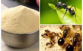 Manka van de mieren in de tuin