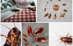 Hoe zich permanent te ontdoen van kakkerlakken in het hostel