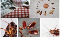 Droomdroom kakkerlakken waar dromen ze over