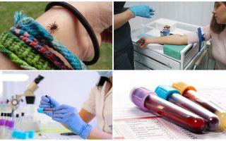 Bloedonderzoek na een tekenbeet