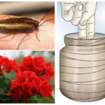Remedies voor kakkerlakken-1