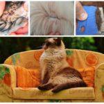 Kattenvlooien