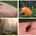 Zwerm muggen in het bos in een droom