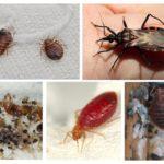Parasitaire bugs