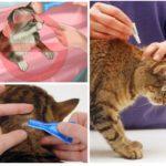Regels voor dierenbehandeling