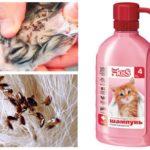 Fleashampoo voor kittens