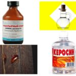 Kakkerlak Remedies