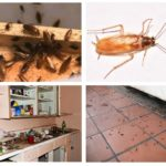Kakkerlakken in het huis