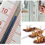 Koud tegen kakkerlakken