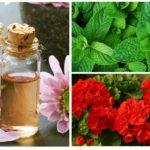 Folkmedicijnen voor mot-1