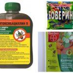 Remedies voor de schorskever