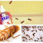 Baron tegen kakkerlakken-1