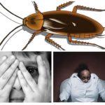 Angst voor kakkerlakken