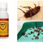 Krijg van kakkerlakken