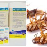 Regent 800 tegen kakkerlakken