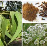 Eucalyptus, anijs en kruidnagel