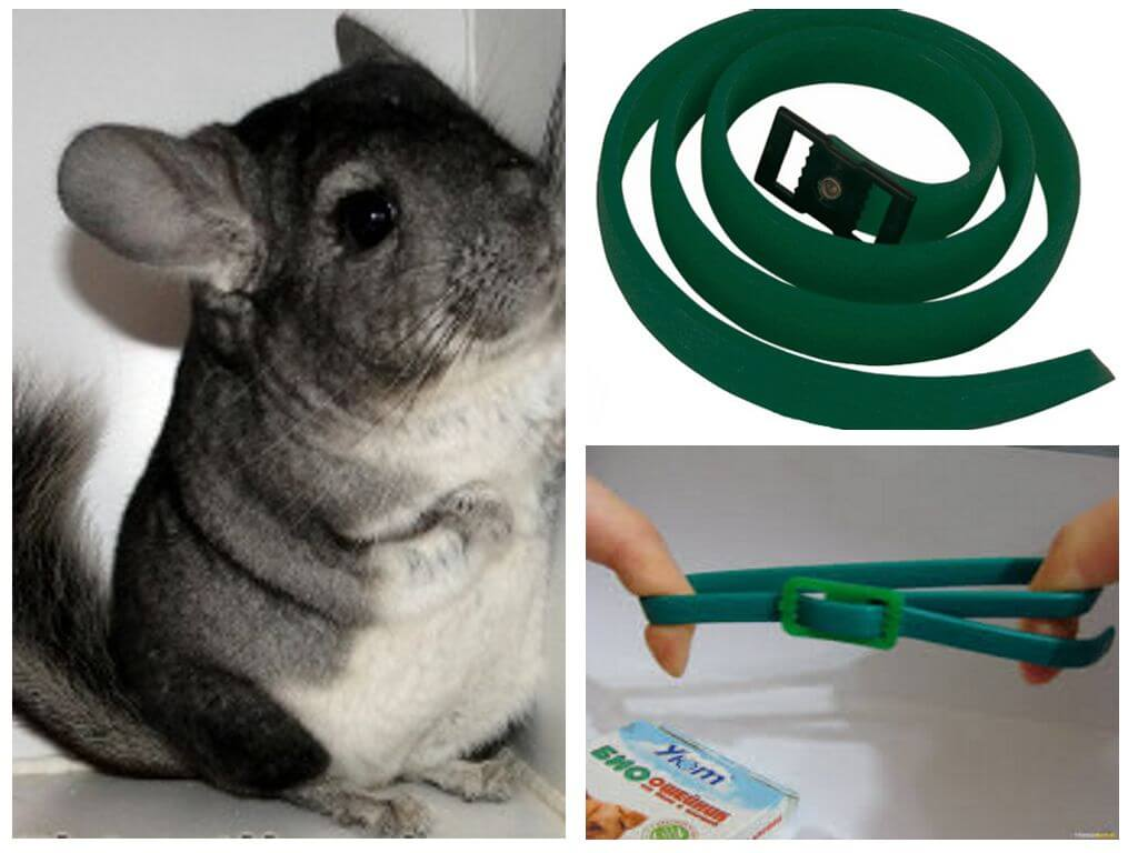 Flea collar voor chinchilla's