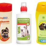 Vlooien shampoo bij honden
