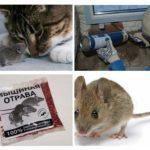 Vechtende muizen