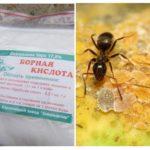 Boorzuur van mieren