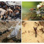Ant-beschaving