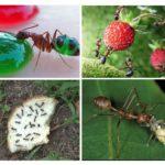 Eten voor mieren