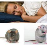 Muizen en ratten dromen